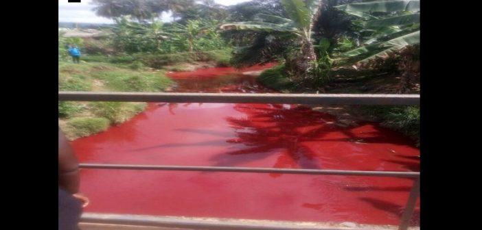 Ghana : un cours d'eau se transforme en mare de sang (vidéo)