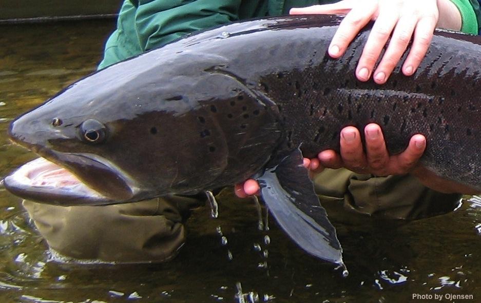 Des pêcheurs font une découverte frappante dans l'estomac d'un poisson géant (vidéo)