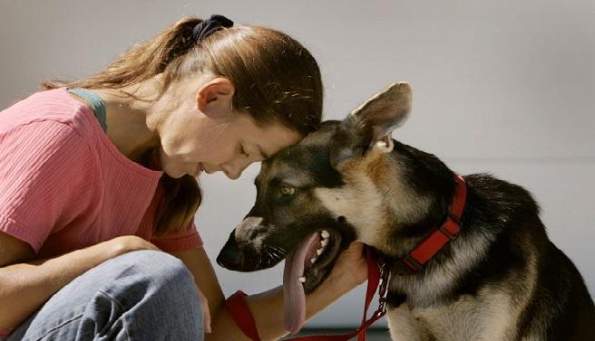 La Cour suprême du Canada légalise le sexe avec des animaux à condition que ….
