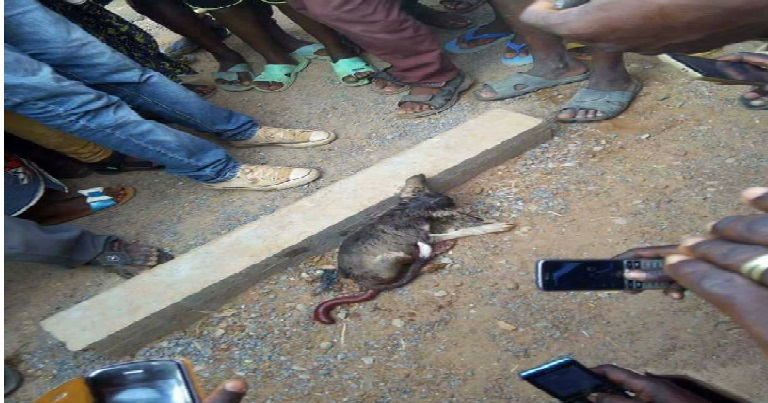 Bénin : Un garcon transformé en chien après avoir ramassé une pièce de 10 FCFA