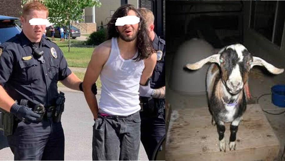 USA: un homme a enchaîné une chèvre dans le sous-sol de sa maison comme esclave sexuelle