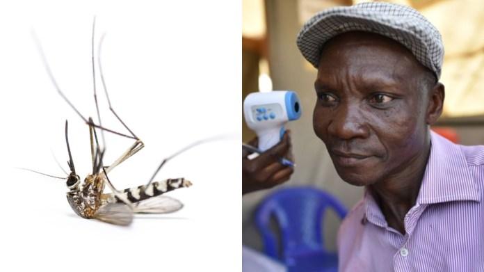 Un homme dont les pets tue les moustiques, payé des millions par une société anti-moustiques