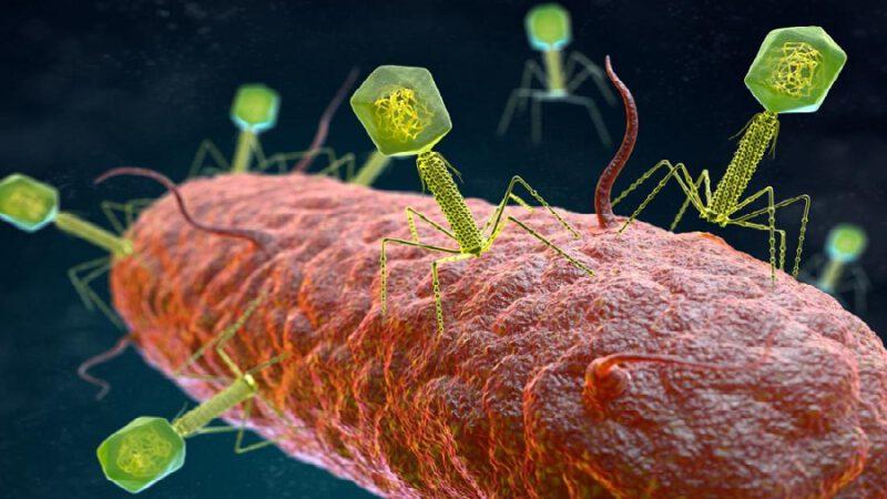 Les 12 virus les plus meurtriers sur Terre
