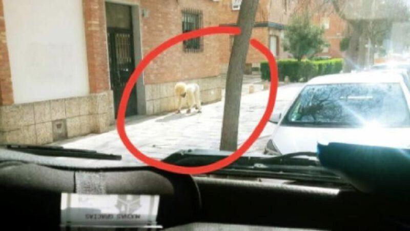 Espagne : un homme se déguise en chien pour sortir de chez lui pendant le confinement