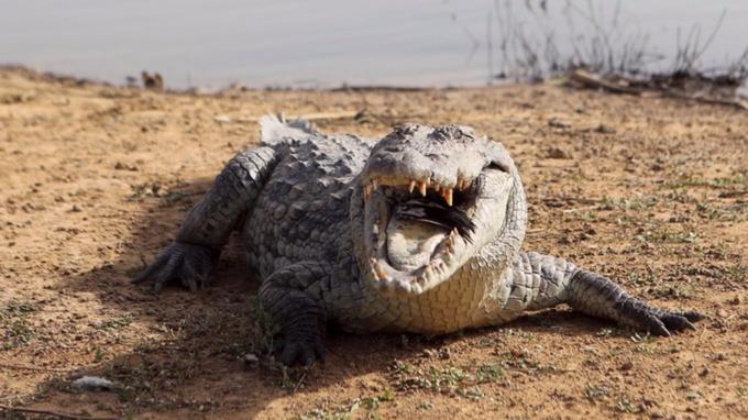 Rwanda: un crocodile tue un jeune homme qui a violé le confinement