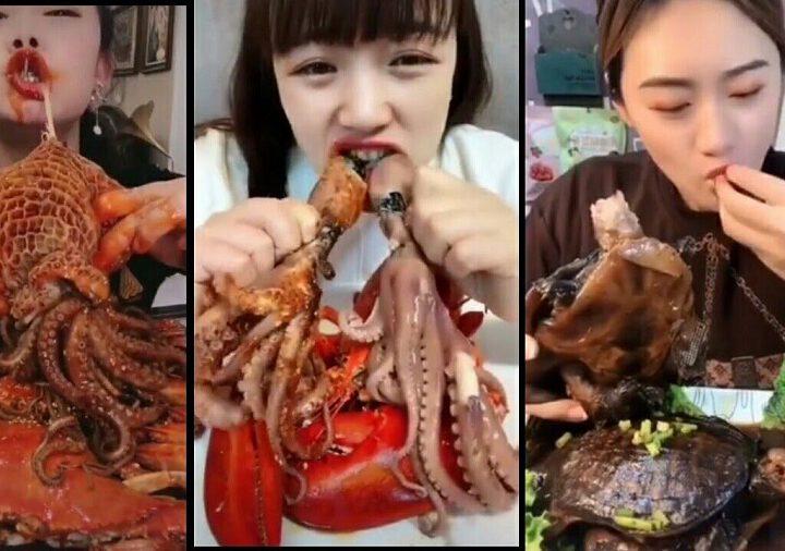 Chine : Interdiction de manger des chiens, serpents, grenouilles et des chats à la suite de la pandémie de coronavirus