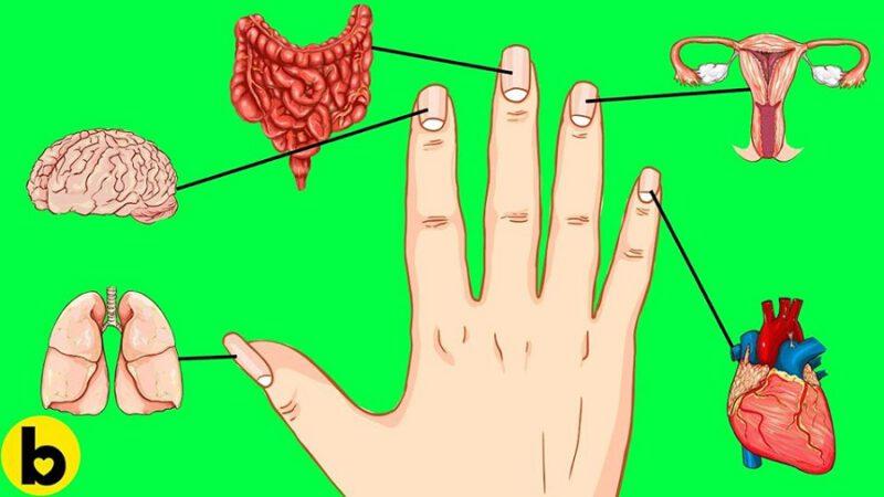 Ce que vos ongles disent de votre état de santé