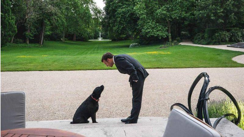 Macron demande aux Français d'adopter des animaux de compagnie