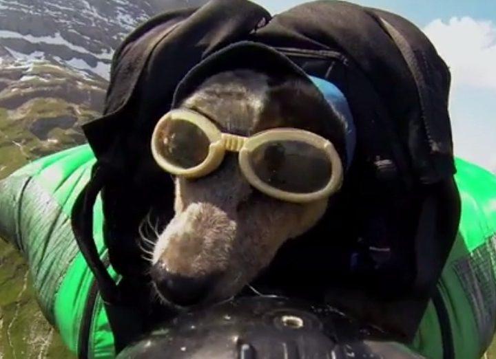 La Russie développe un système de parachute pour les chiens de combat